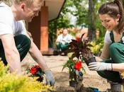 Things Consider Before Starting Landscaping Project
