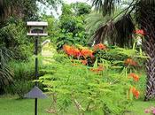 Weathered Wood Bird Feeder Stand