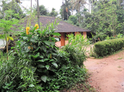 #HolidayDifferently with Sterling: Unique Experiences Sterling Wayanad