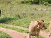 Incredible Africa: Serengeti State Mind