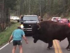 Bison-Taunting National Park Visitor Sentenced Days Jail