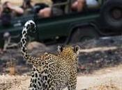 Five Best African Safari Parks Have See!