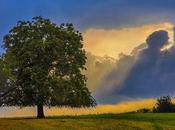 Photo: God's Rays Nouvelle Pic: Rayons Dieu Visit: Www.benheine.com #benheinephotograhy #landscape #nature #sunset #photographie #coucherdesoleil #photo #rochefort #belgium #countryside #belgique #paysdesvallees #arbres #paysage #fineart #art #p...