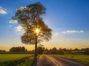 Gift Life Photo Nouvelle Visit: Www.benheine.com #tree #arbre #sunset #coucherdesoleil #benheinephotograhy #sky #nature #free #freedom #gift #don #landscape #rochefort #provincedenamur