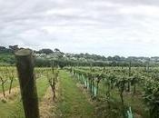 Travel: Polgoon Vineyard Orchard, Cornwall