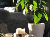 Home Garden Styling