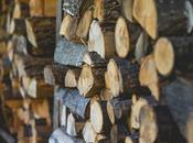 Choose Right Firewood Your Fireplace