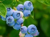 Health Benefits Blueberries Tasty Recipes