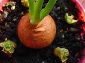Promising Plants