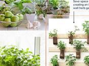 Indoor Herb Garden: Everything Need Know