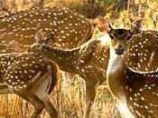 Wildlife National Parks/sanctuary Rajasthan