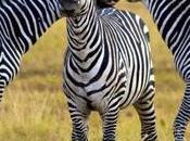 North South: Which Best Tanzania Safari?