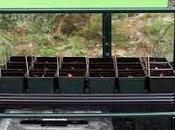 Keeping Frost Seedlings