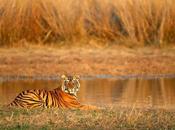 Wildlife Parks Rajasthan Tourism