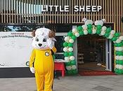 Love Lamb Little Sheep