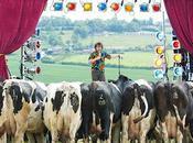 Cows Have Sense Humor
