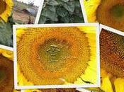 Scarecrow's Garden Journal Notes: 2011
