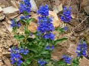 Wordless Wednesdays: Wasatch Wildflowers