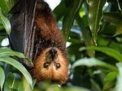Politics Matter: Undoing Conservation Progress Land Dodo