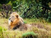 Explore World Animals with Wildlife Camera