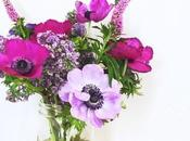Anemones Violets