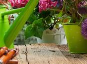 Kinds Plug Plants That Your Garden