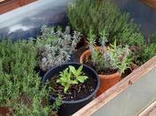 Return Herbs