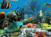 Best Places Diving Snorkeling Costa Rica