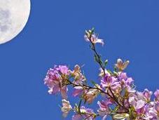 Full Moon Meditation with Metatron: Awakening April