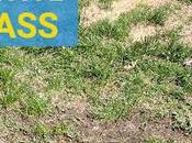 Revive Dead Grass