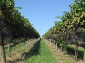 Voyage Through Berks County Wine Trails