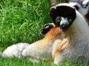 Copy 'The Cotswold Wildlife Park, Celebration Gardens'