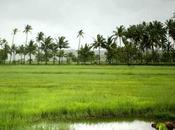 Experience Tripraja River Rafting During Monsoon