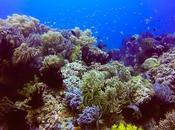 Black Forest: Stunning Underwater Jewel Camiguin