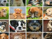 Adorable Cutest Small Breeds World