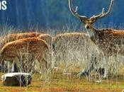 Trip Corbett National Park Monsoons