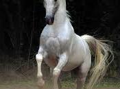 Four Legs Good Horses