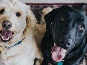 Your Dog's Dental Hygiene Scratch?