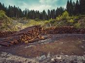 Trump Pushes Exempt Tongass National Forest Alaska From Logging Restrictions