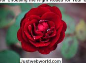 Steps Choosing Right Roses Your Garden