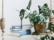Breathe Life into Your Homes: Indoor Plants Home Décor