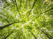 Ireland Takes Mass Planting Route Fight Climate Change Setting Ambitious Target Million Trees 2040