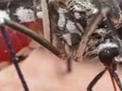 Franken-Mosquitoes Coming