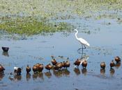 Kakadu Bird Week 2019