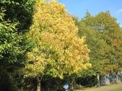MOUNTSFIELD PARK: London's Many Green Spaces, Guest Post Gretchen Woelfle