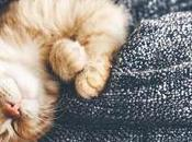 Many Hours Cats Sleep? They Sleep Much?
