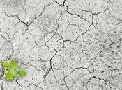 Impact Climate Change Flowering Plants