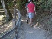 HUCKLEBERRY TRAIL: Shady Hike Oakland Hills