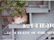 Word Week: Fruit Spirit- Patience