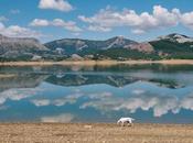 Dog, Large Spain